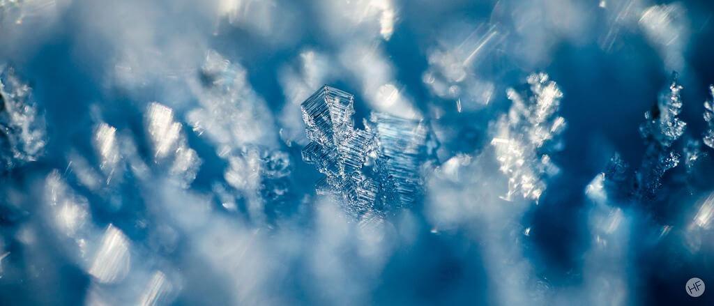 Hannes Flo macro snowflake