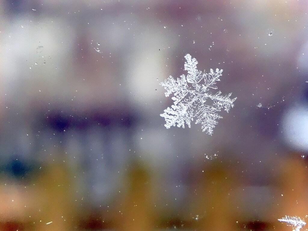 Andrew Gustar snowflake