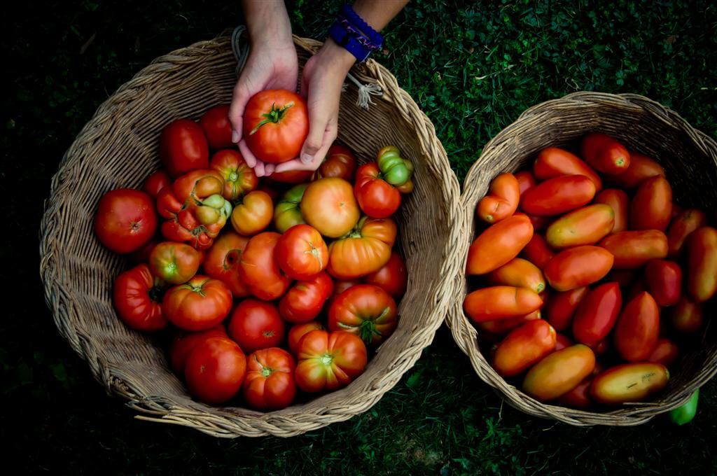 Ana GR - tomatoes