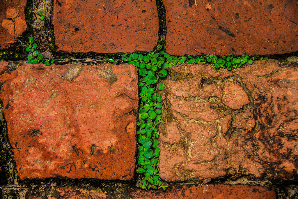 Tuhin alom Photography - Perfect abstract of nature in bricks