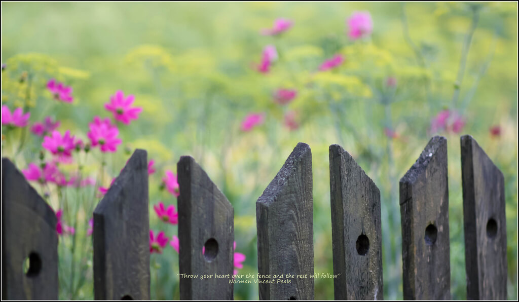 Ana Lukascuk fence