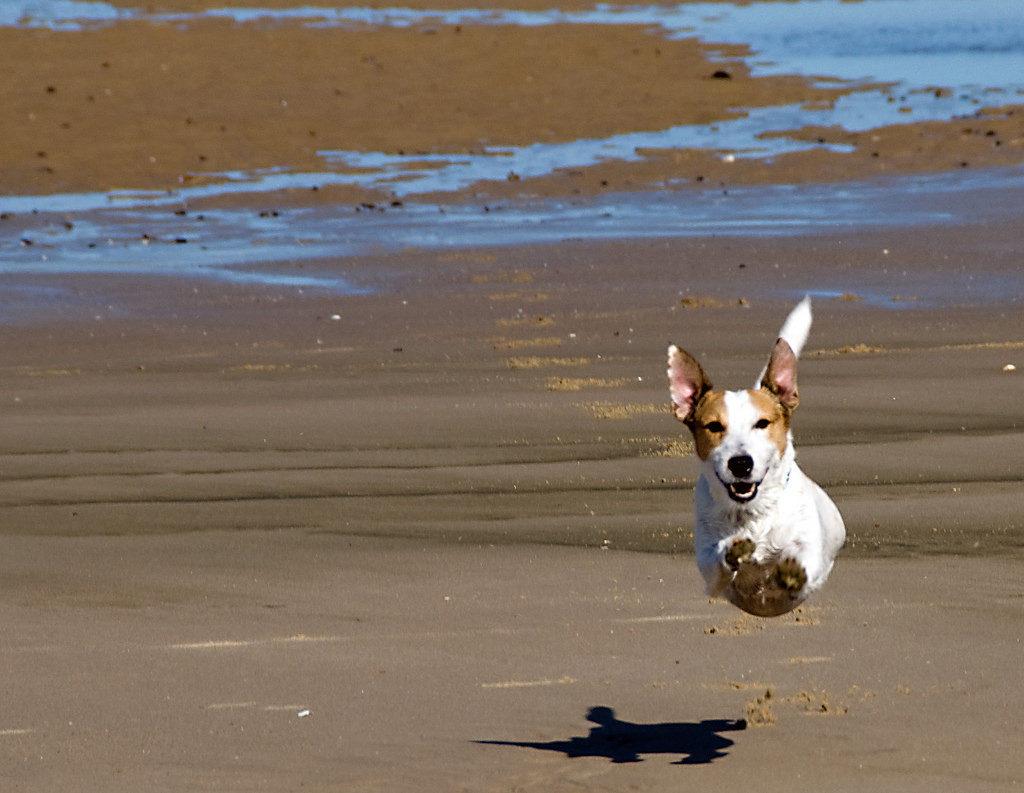 Franco Ferri Mala - The Flying dog