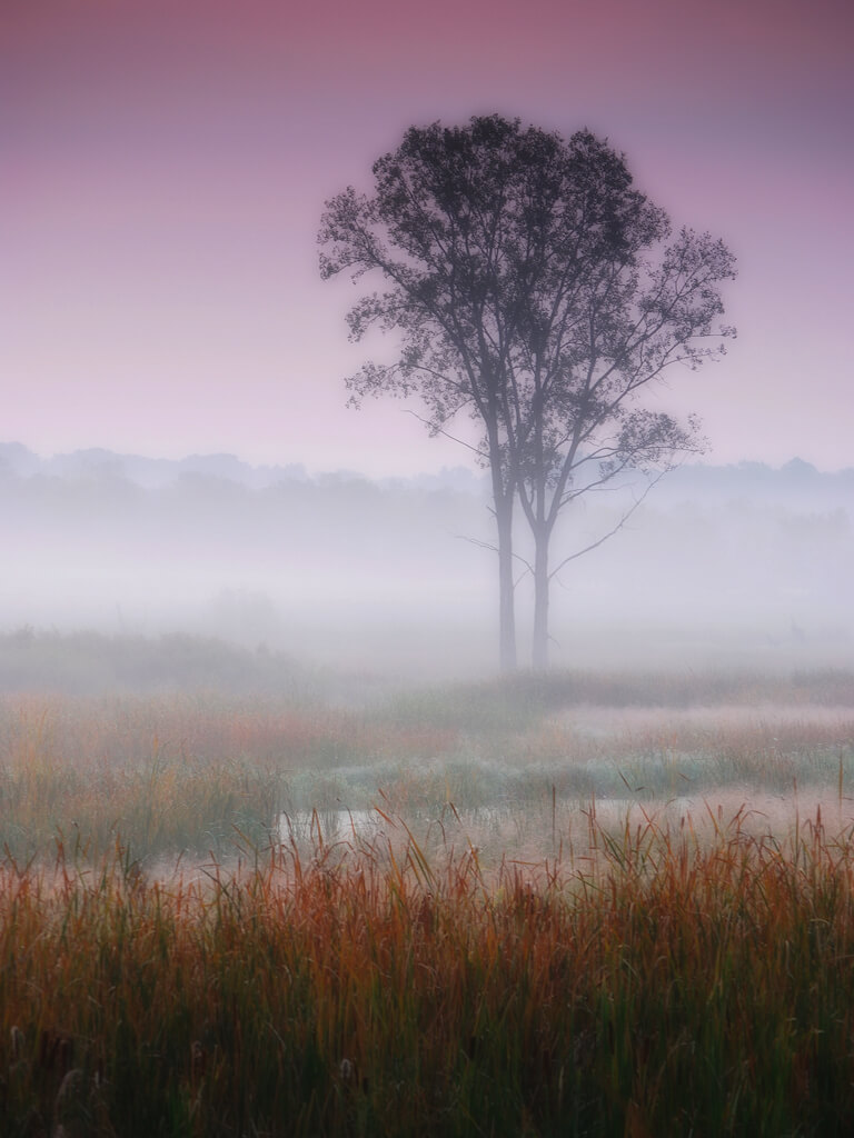James Jordan - Misty autumn dawn