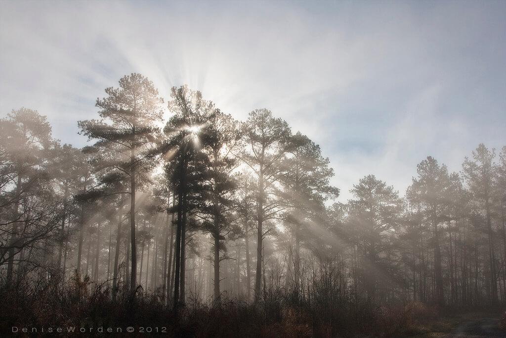 Denise Worden fog trees