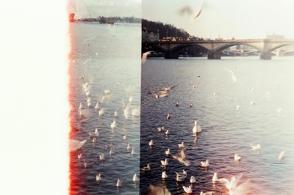 Marketa - Swans
