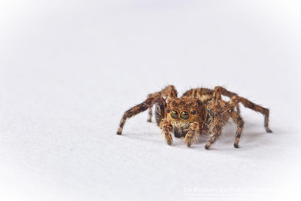 ruben alexander - spider infinity cove