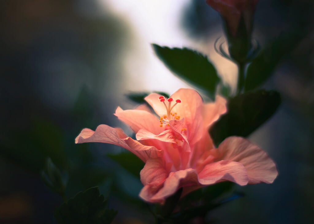 55 Beautiful Pictures Of Flowers For Your Inspiration