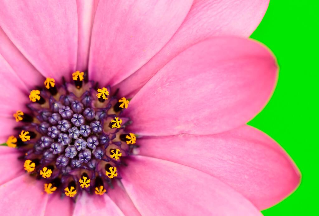 Steven Scott - Pink flower