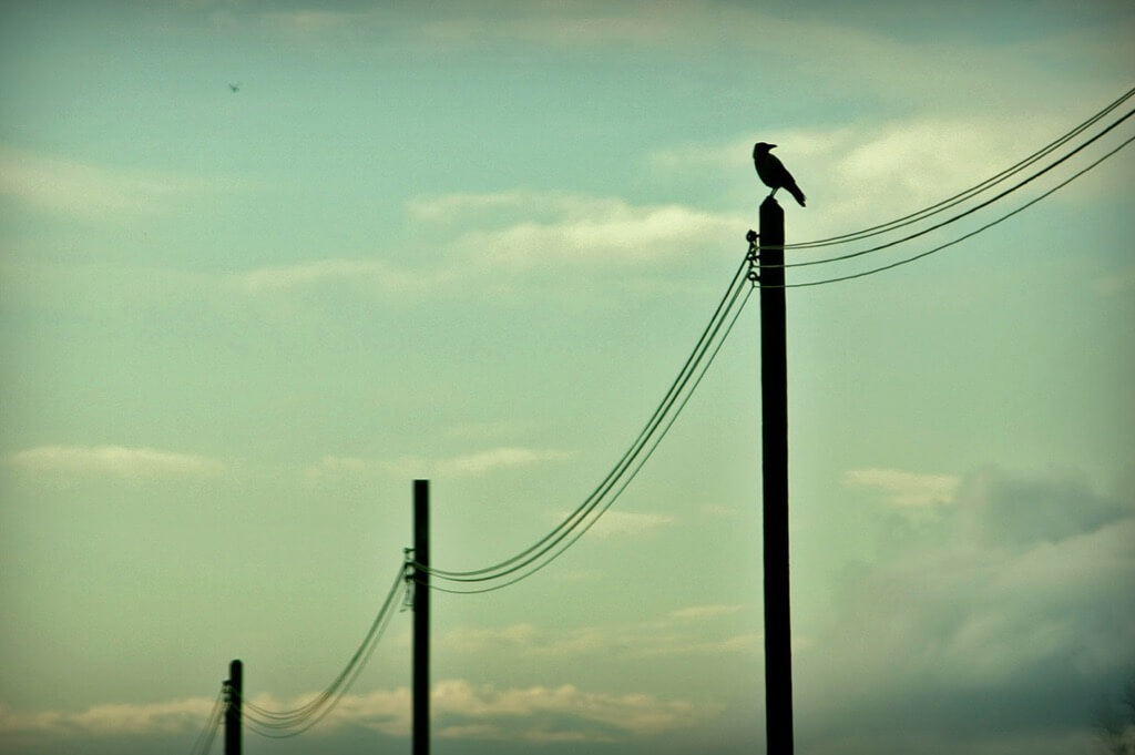 Claudio - Crow