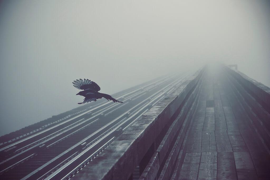 Krystian Olszanski - raven in fog