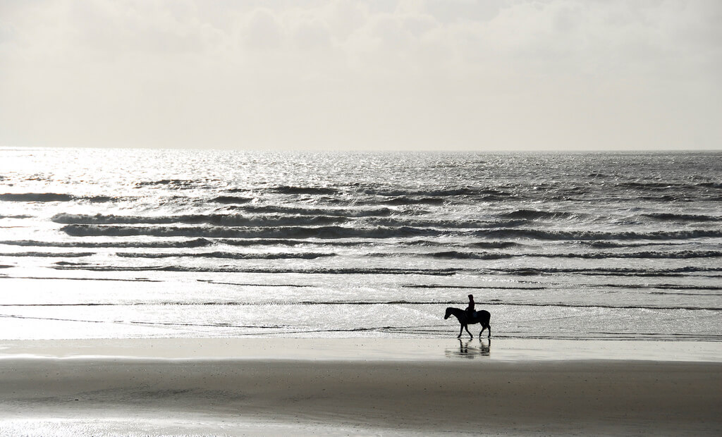 Richard Watkins LRPS - Camber Beach horse