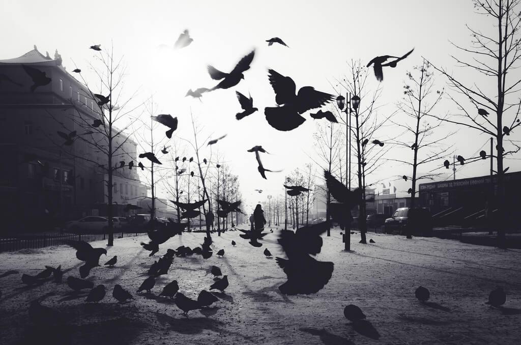 Shirren Lim - birds silhouette