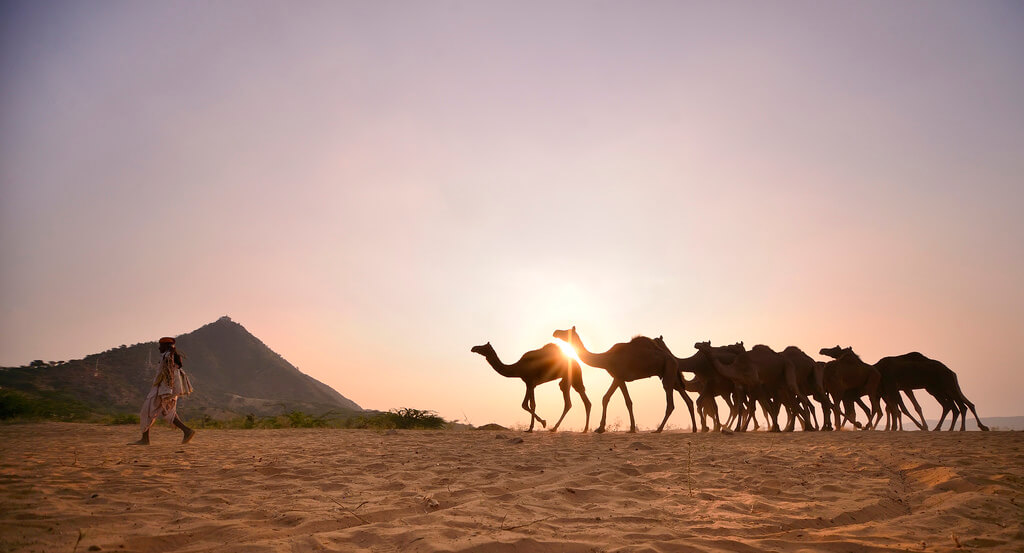 Nimit Nigam - Sunset walk from Pushkar Camel Fair