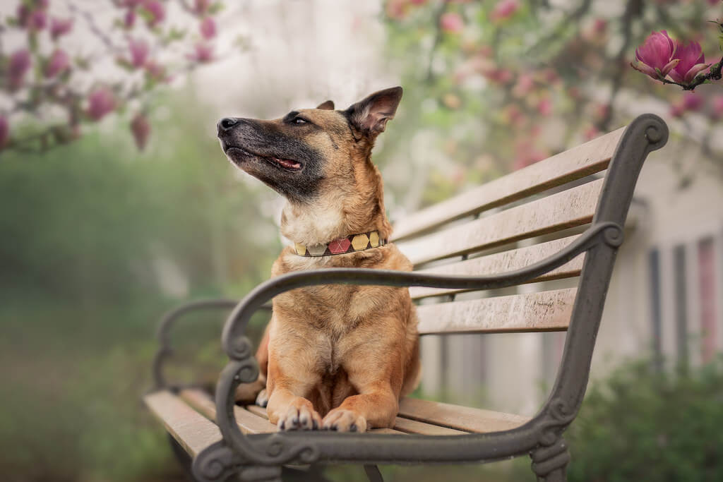 Katie McLellan dog on bench