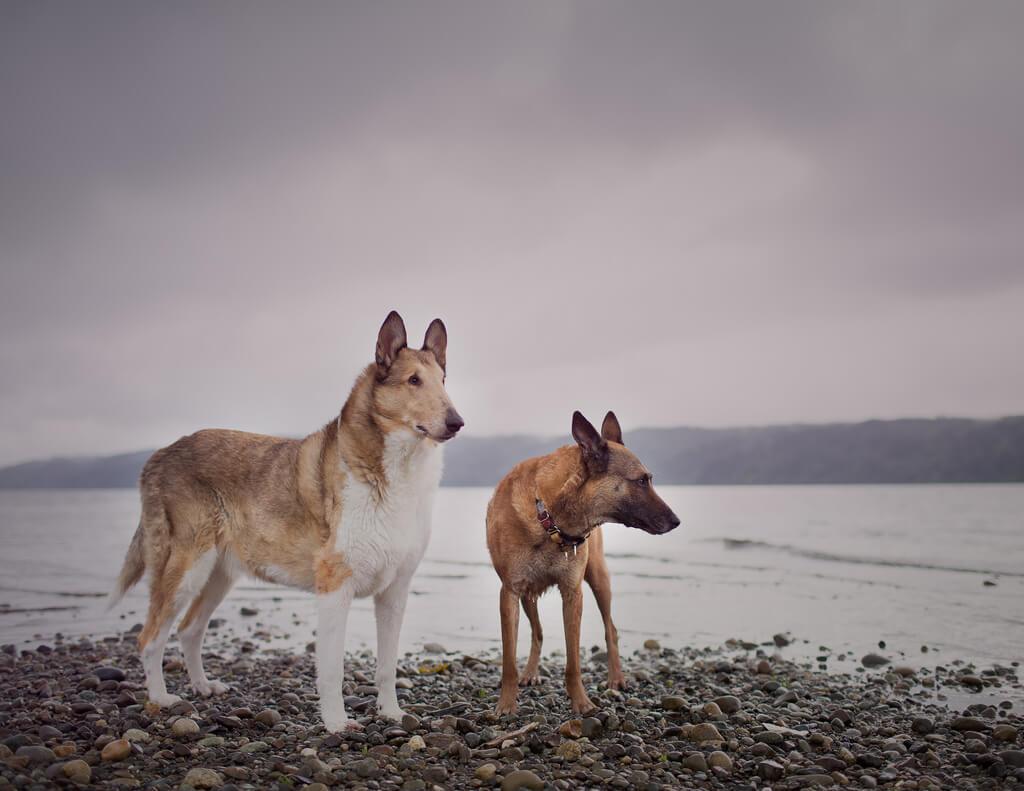 Katie McLellan two dogs