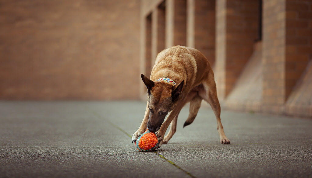 Katie McLellan dog with ball