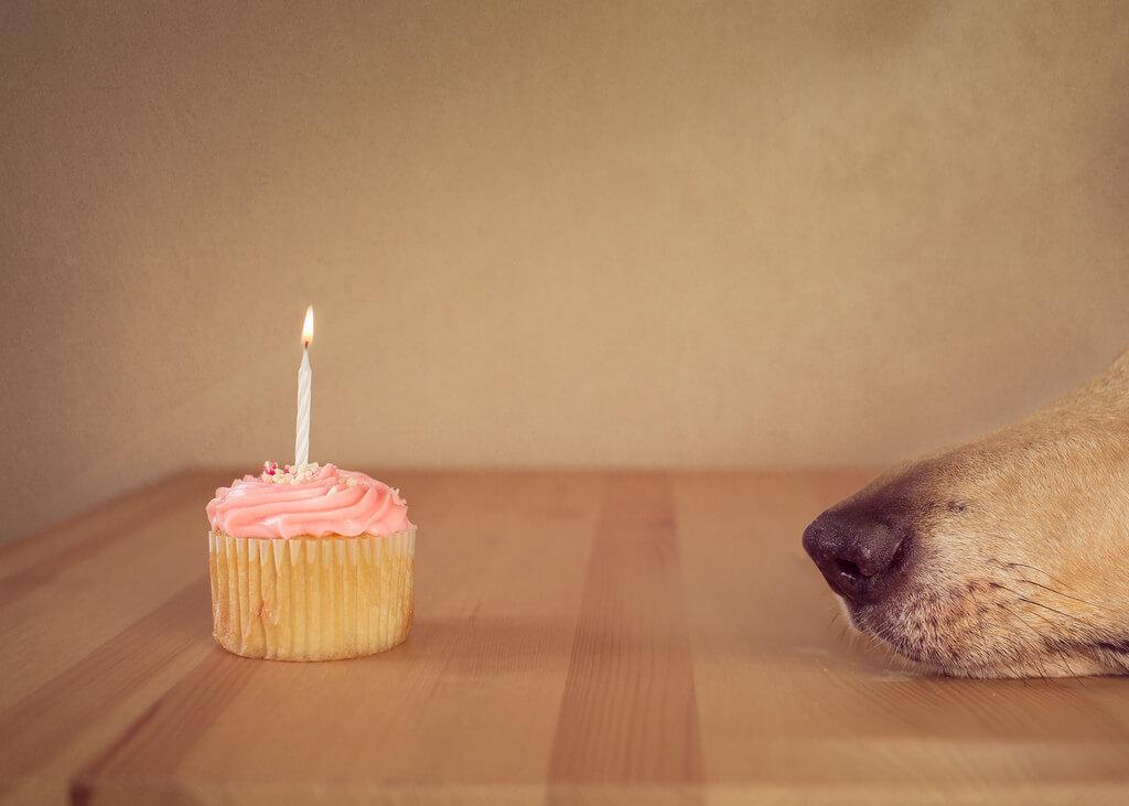 Katie McLellan cupcake dog