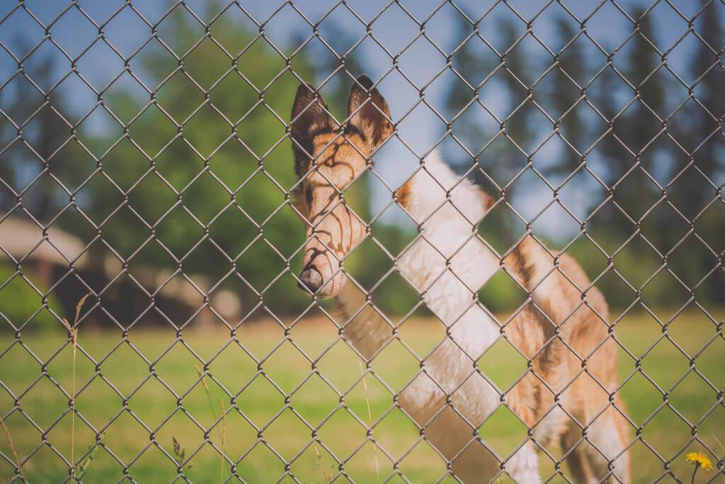 Katie McLellan dog photo manipulation