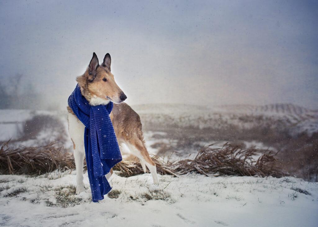 Katie McLellan dog scarf