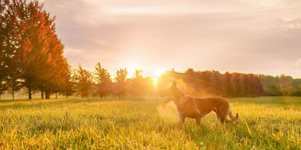 Katie McLellan dog in field