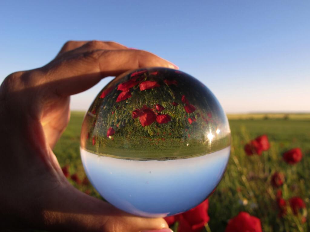 jacinta lluch valero - poppy field