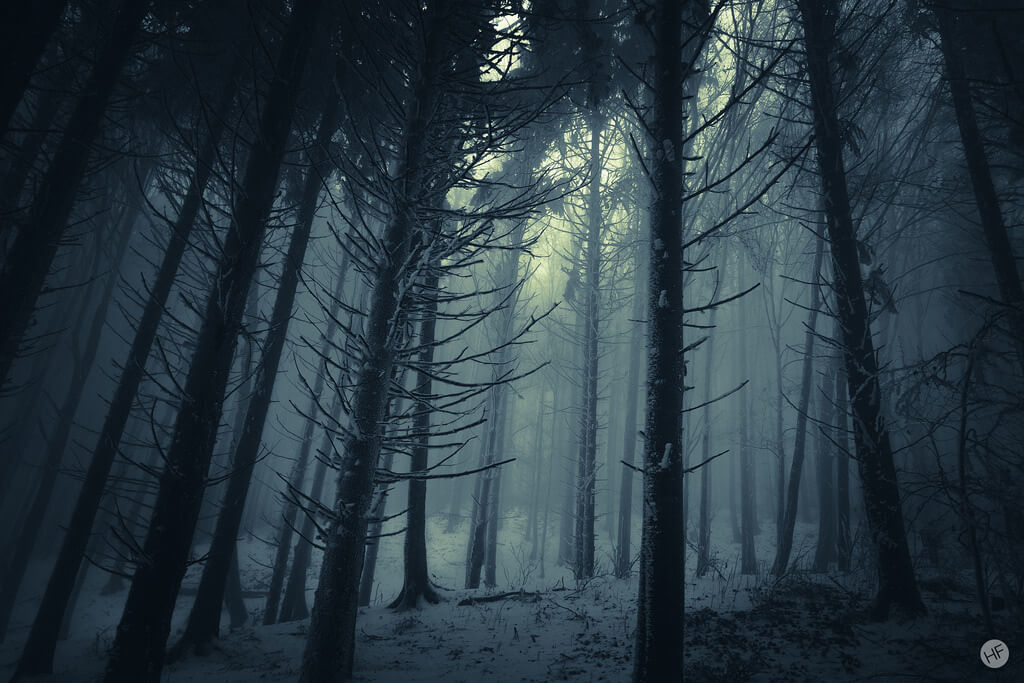 Hannes Flo - dark foggy forest