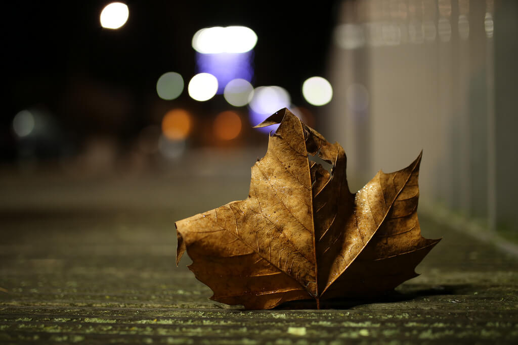 brown leaf