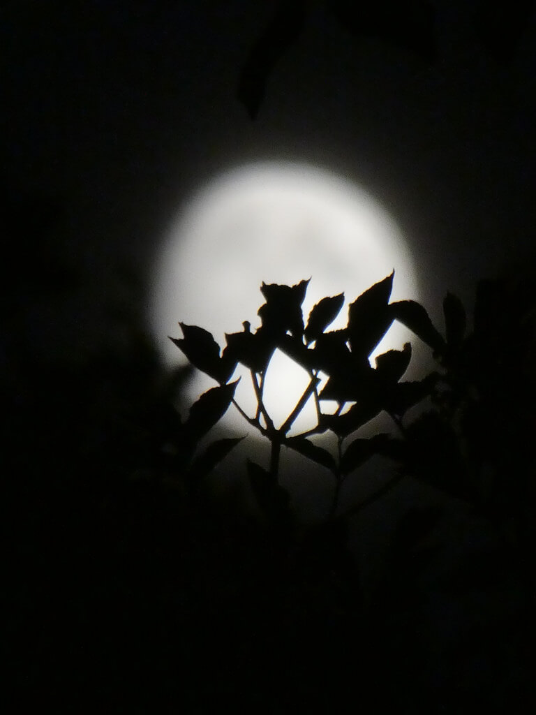 Tanja Hansen - Moonlight silhouette