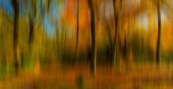 Paul Shears - Autumn Abstract