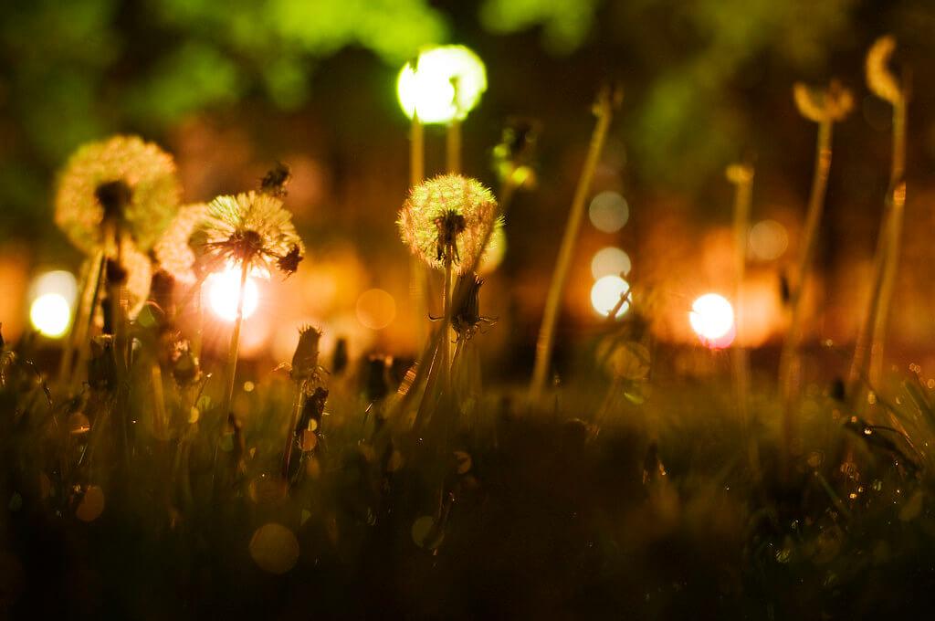 maria izaurralde - dandelions city