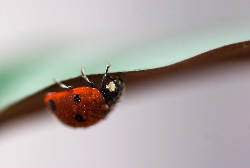 Минимализм в фотографии || Iolanda - ladybug texture