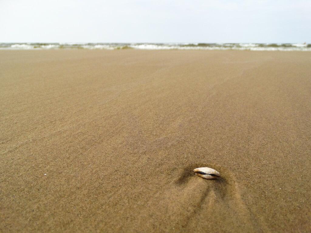 Jevgēnijs Šlihto - Seashell