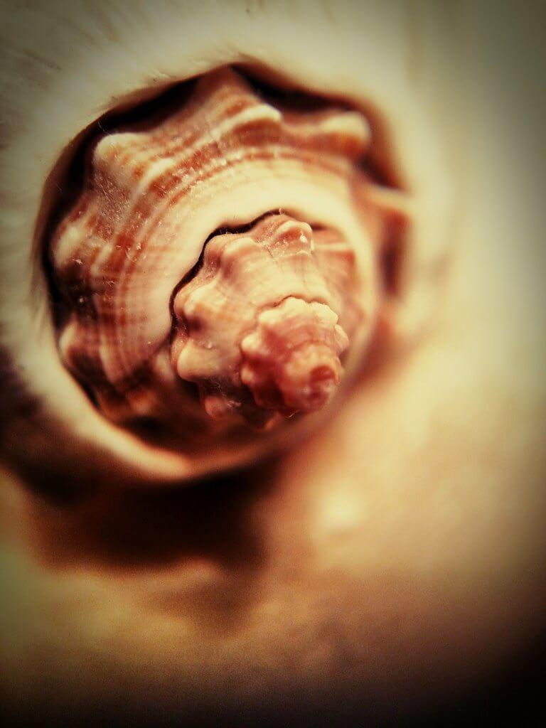 Thad Zajdowicz - Seashell