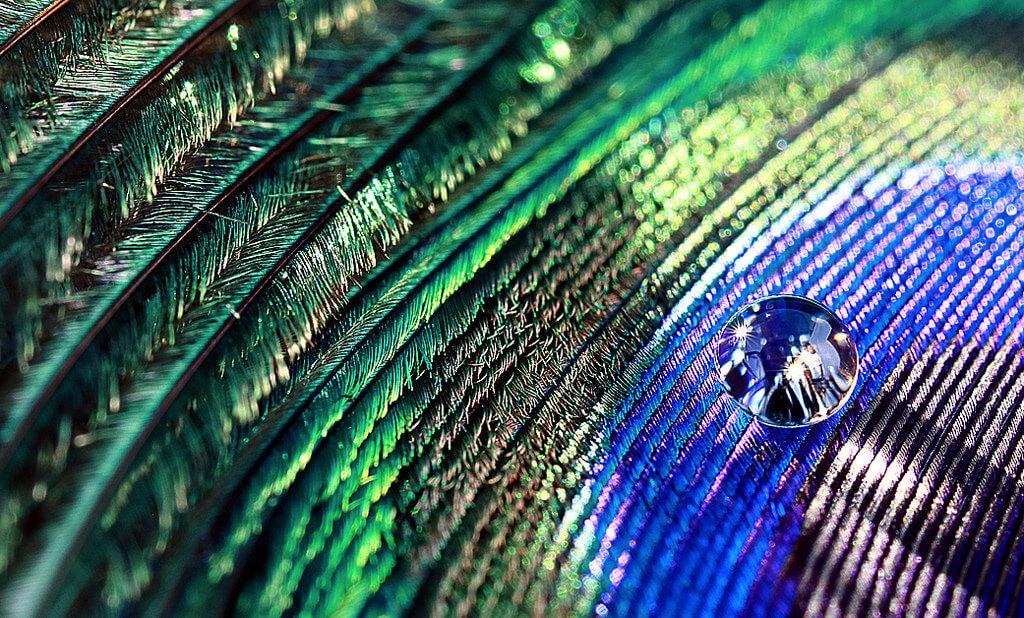 Sue Corbisez - Feather Droplet