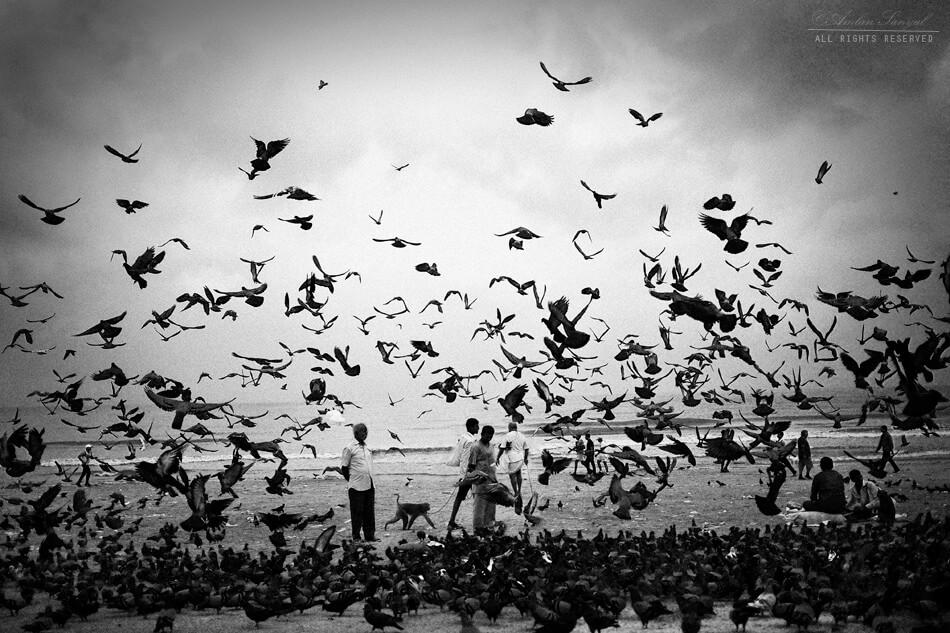 Amlan Sanyal - MUMBAI seagulls