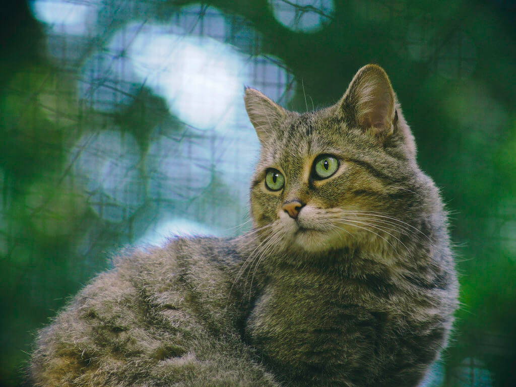 Torsten Behrens - Cat Bokeh - Schleswig-Holstein - Germany