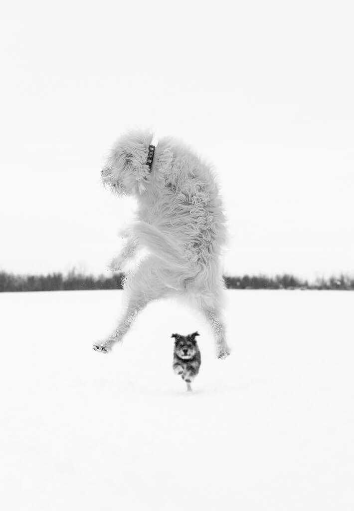 Sarah Bourque - The jump