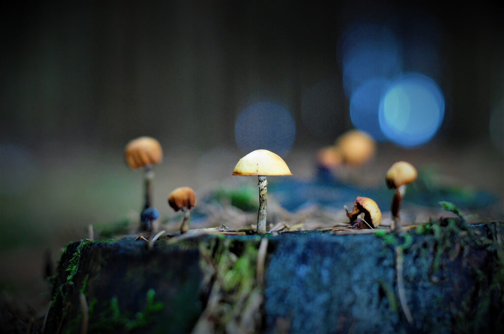 Bastian_Schmidt - bokeh mushrooms