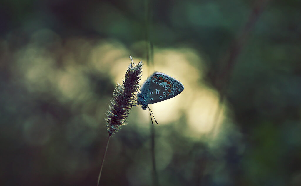 Gabriel Caparó - bokeh butterfly