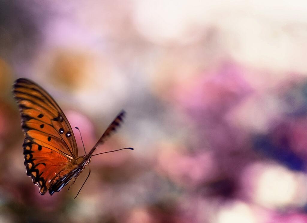 Joel Olives - butterfly bokeh