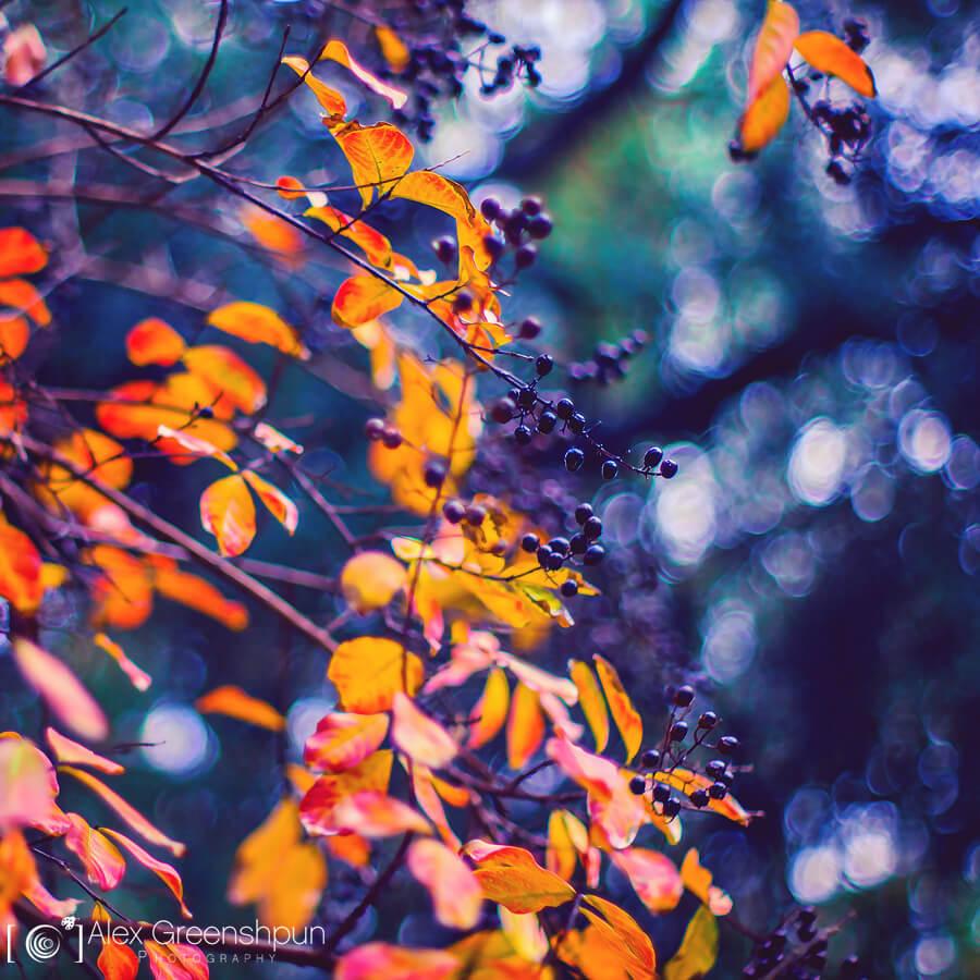 Alex Greenshpun - Autumn leaves