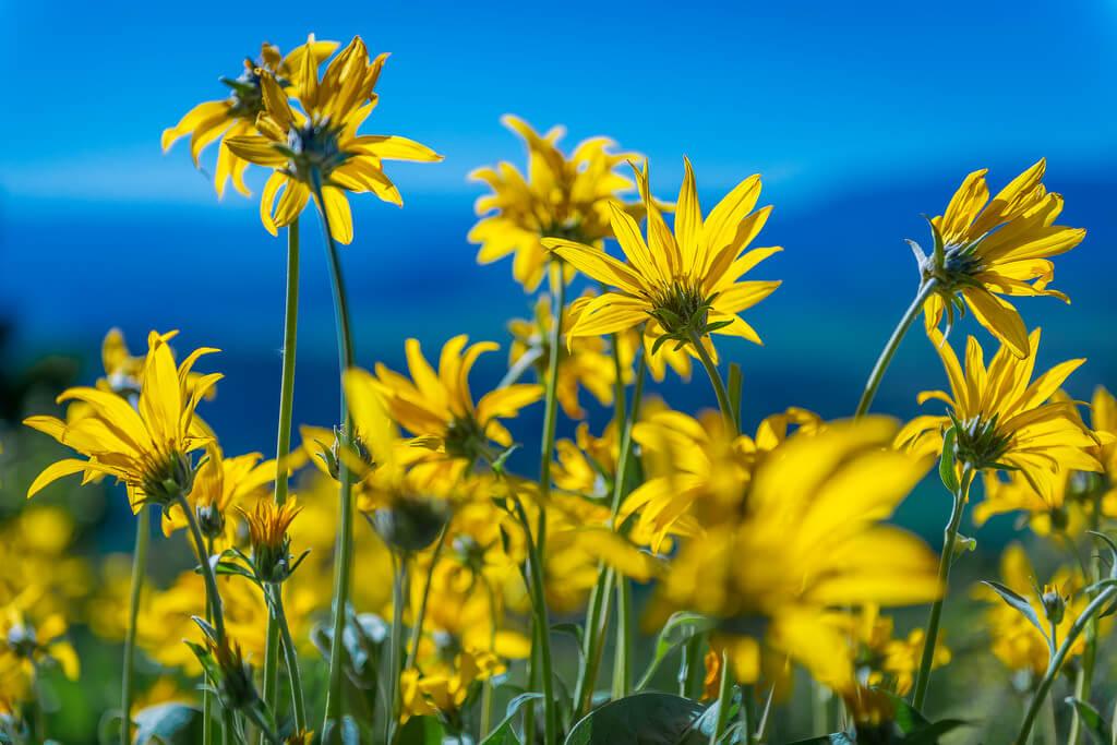Ken Lane - Wildflowers at Signal Mountain