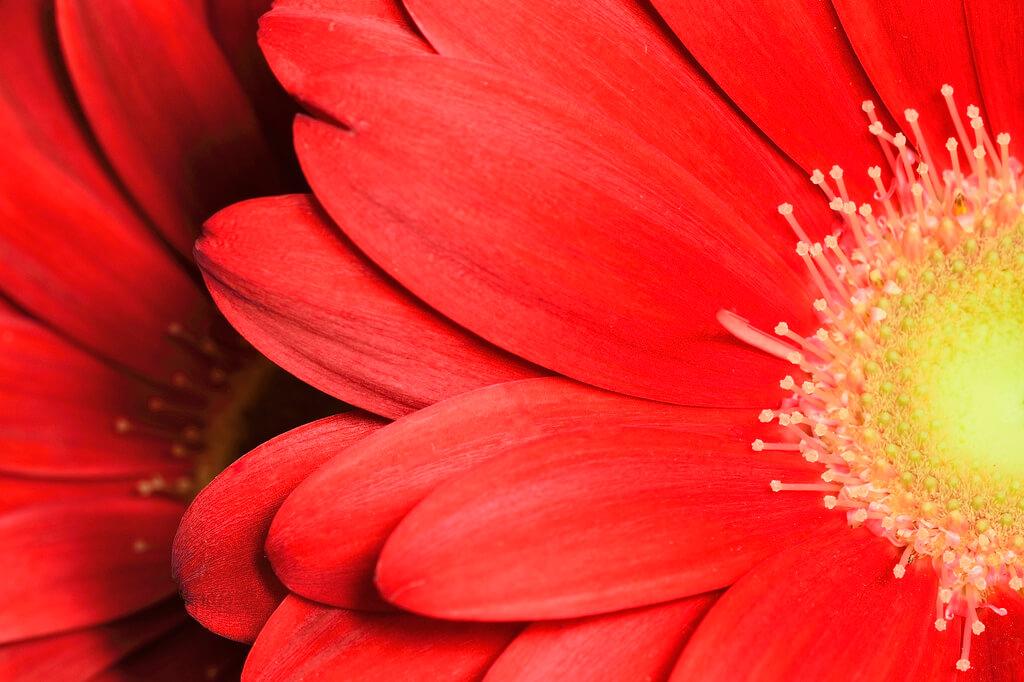 Steven Scott - flower Yellow center Red Petals