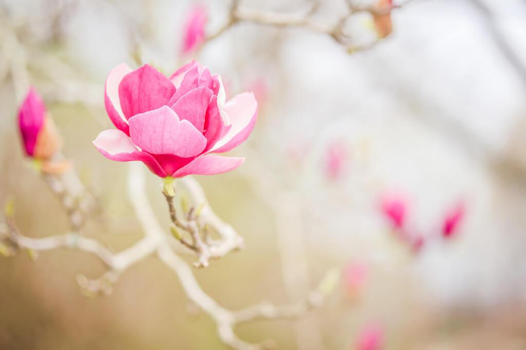 Sheri Elizabeth (Sheri Baker) - Pink blossom