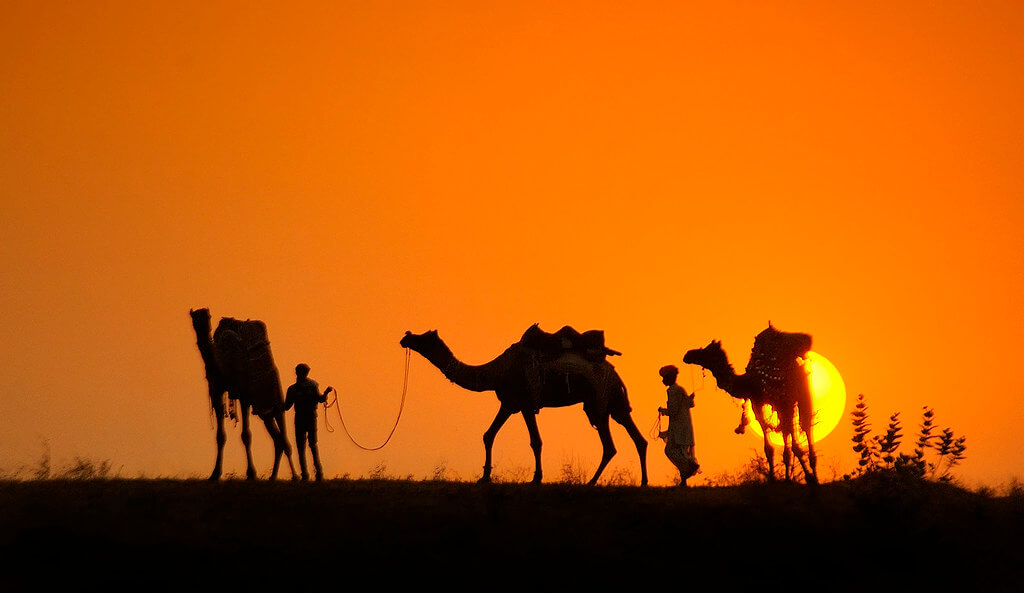 Nimit Nigam - camels