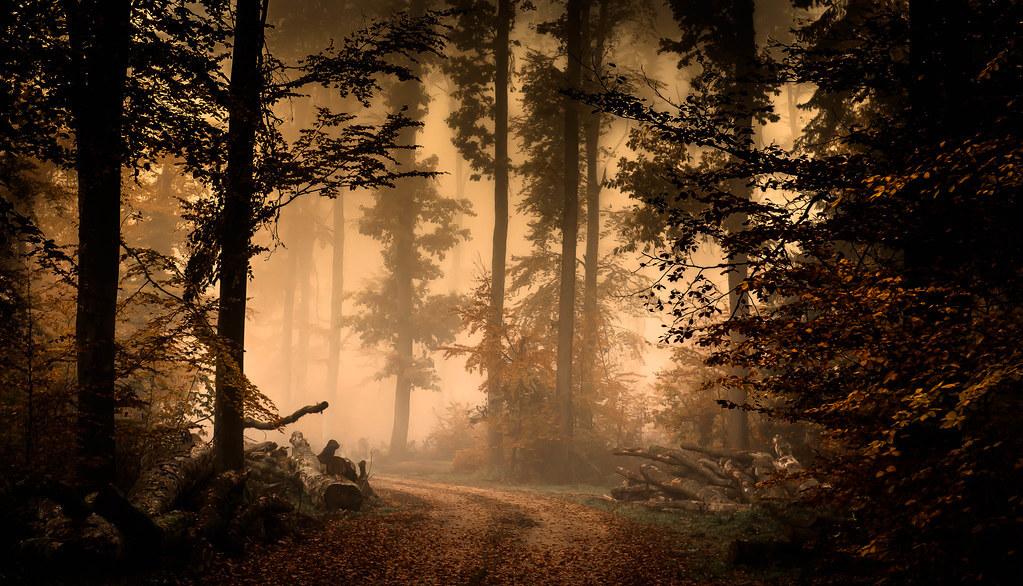 voyeurné - forest