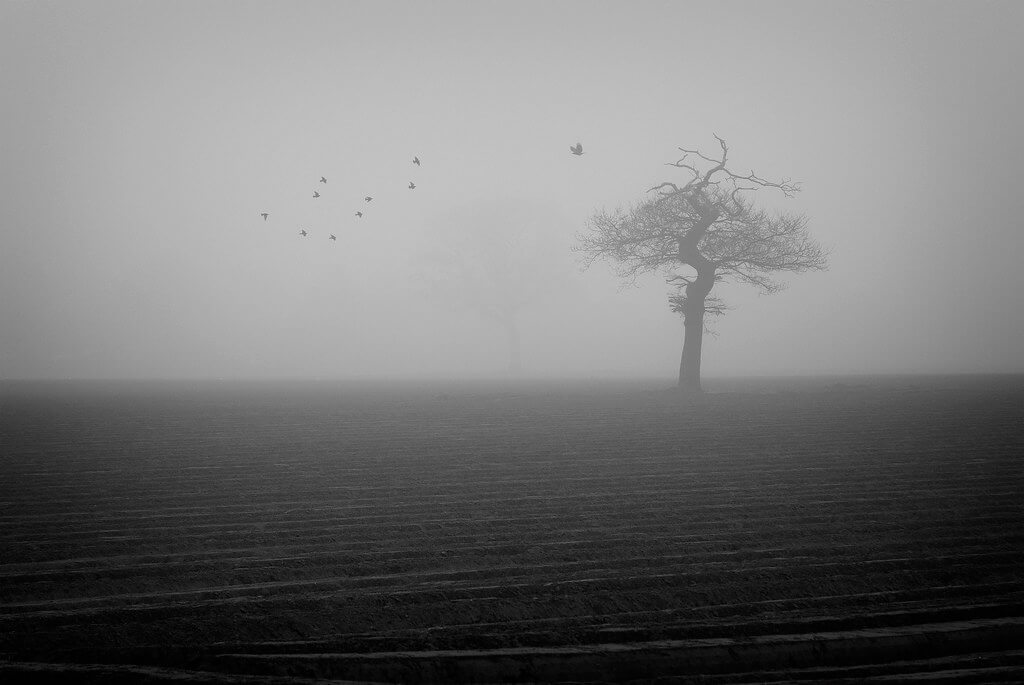James Drury - fog, tree, some birds
