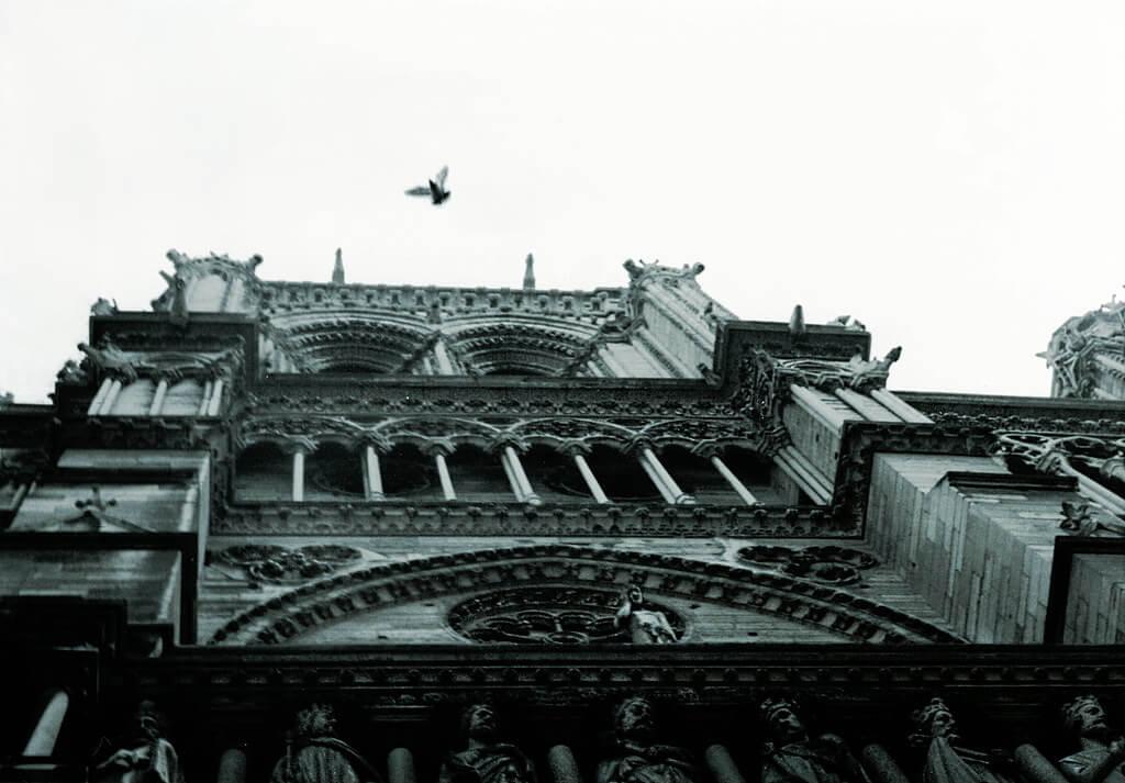 VV Nincic - Notre-Dame Pigeon