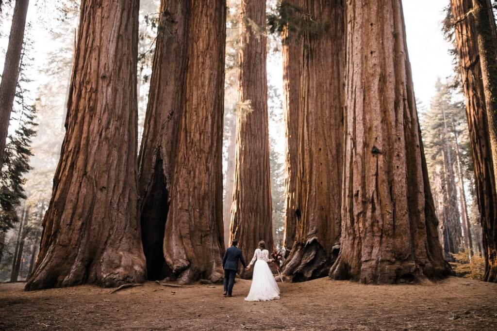 Hearnes Photography - adventure elopement forest