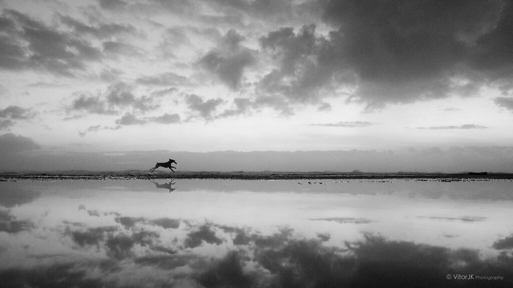 Vitor Junqueira - dog lake reflection black and white